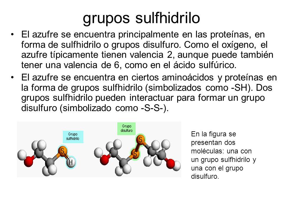 grupos sulfhidrilo