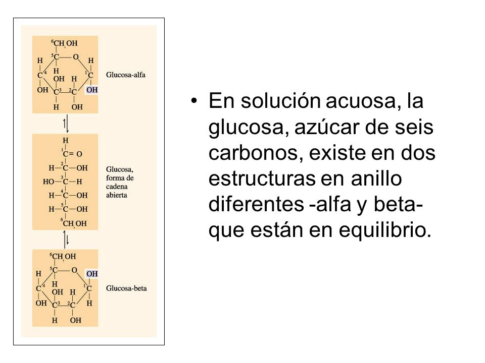 En solución acuosa, la glucosa, azúcar de seis carbonos, existe en dos estructuras en anillo diferentes -alfa y beta- que están en equilibrio.