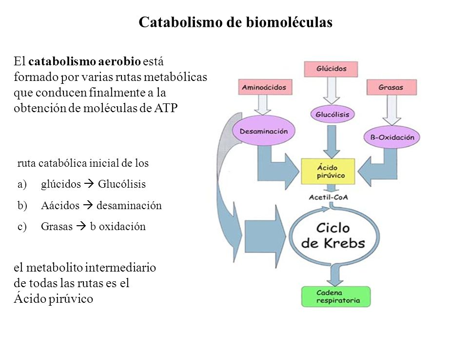 Catabolismo de biomoléculas