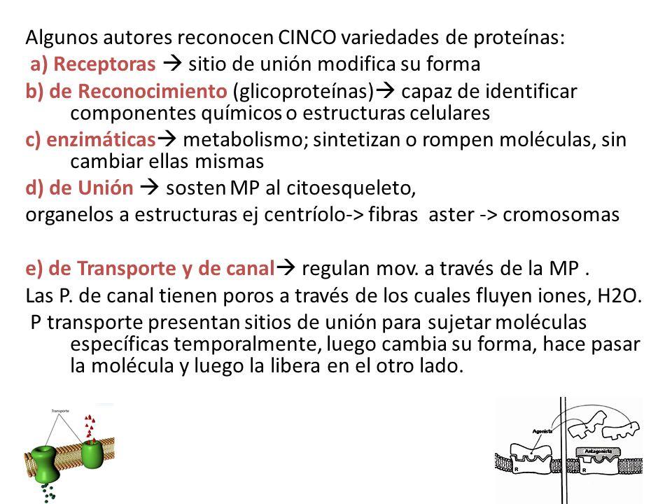 Algunos autores reconocen CINCO variedades de proteínas: