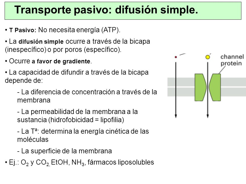 Transporte pasivo: difusión simple.
