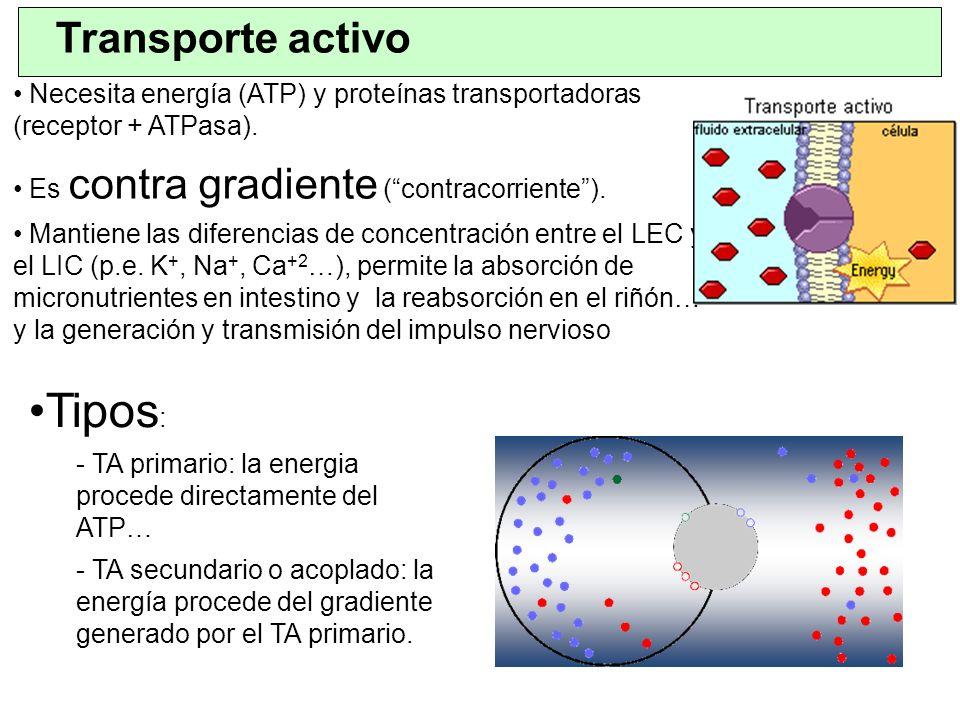 Tipos: Transporte activo