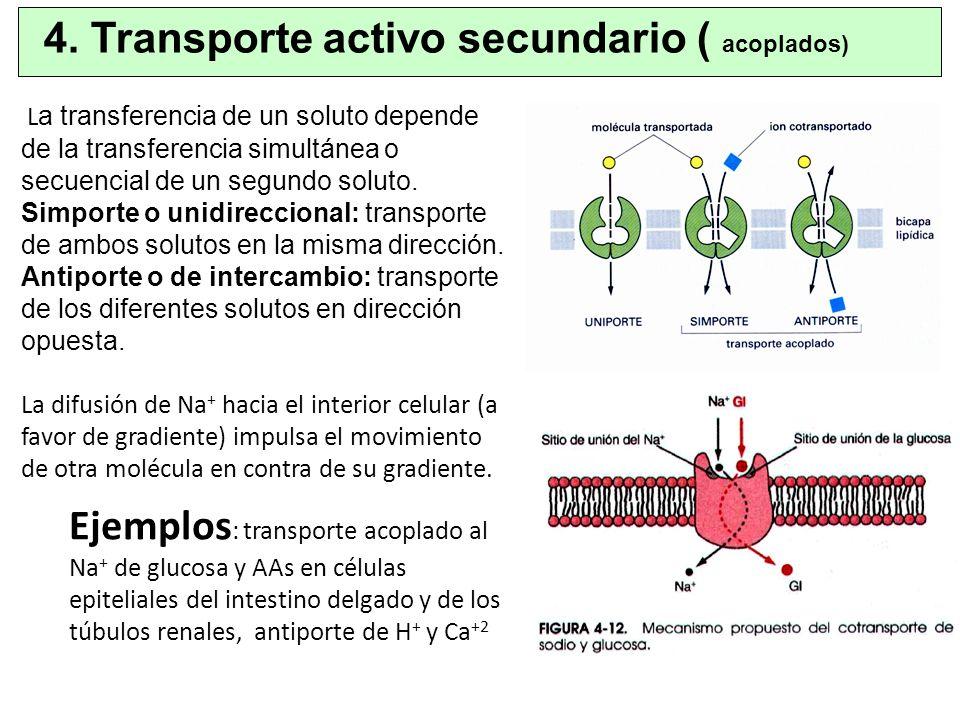 4. Transporte activo secundario ( acoplados)
