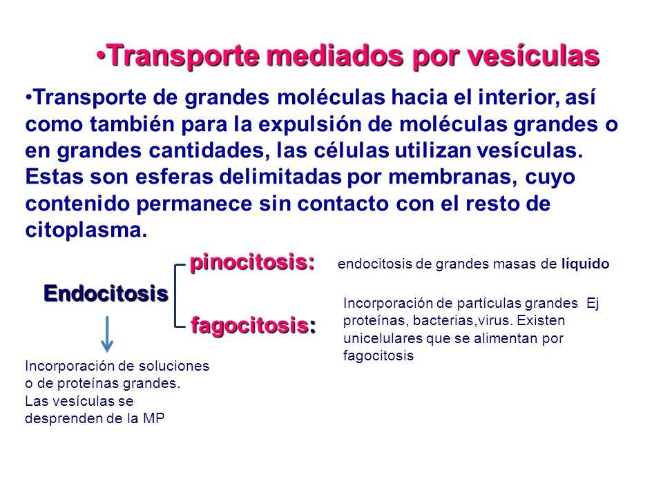 Transporte mediados por vesículas