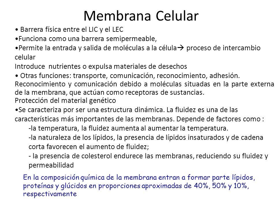 Membrana Celular Barrera física entre el LIC y el LEC