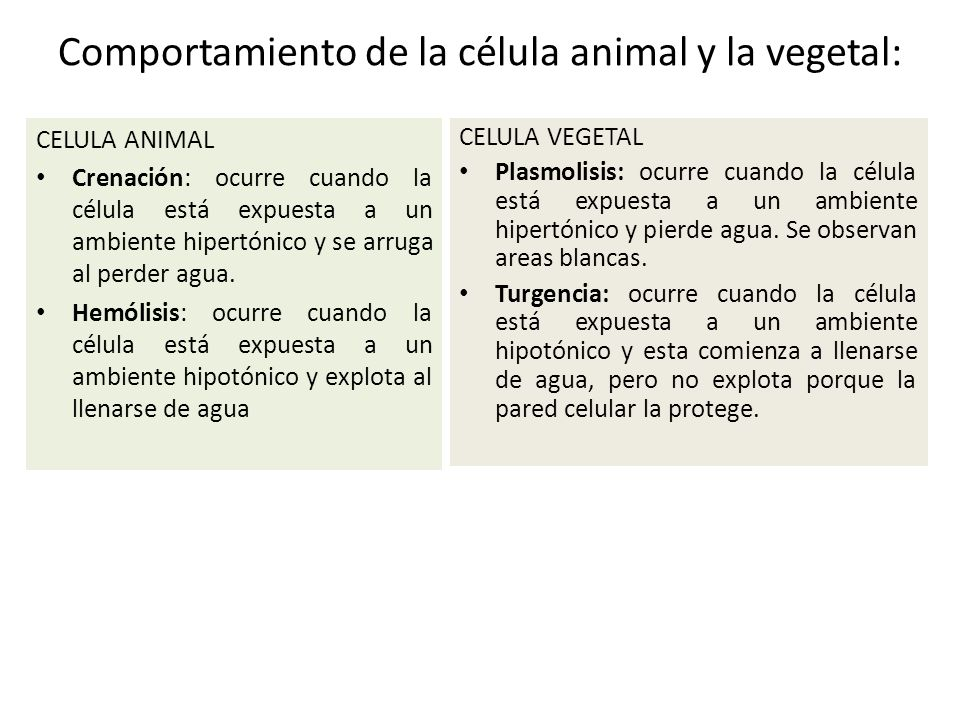 Comportamiento de la célula animal y la vegetal: