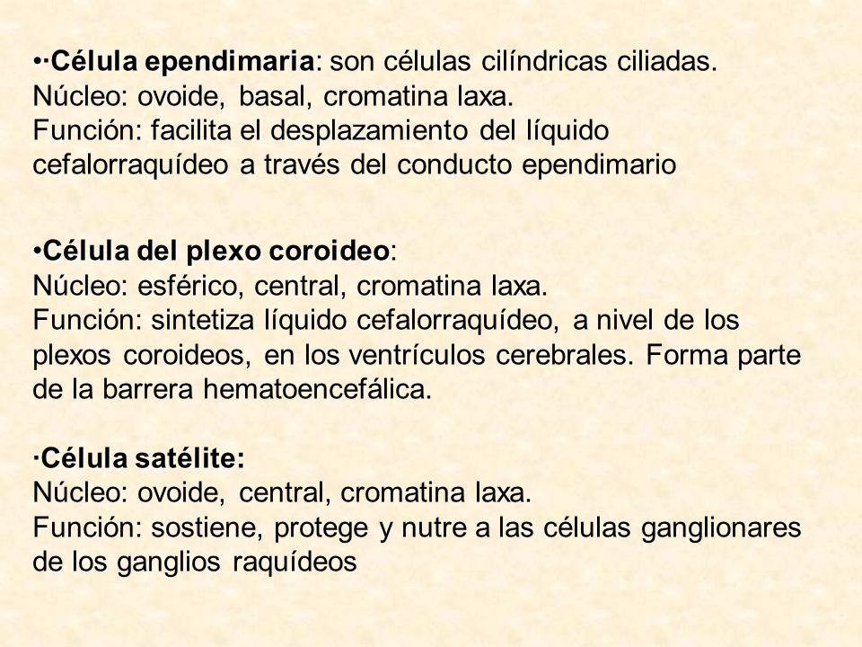 ·Célula ependimaria: son células cilíndricas ciliadas