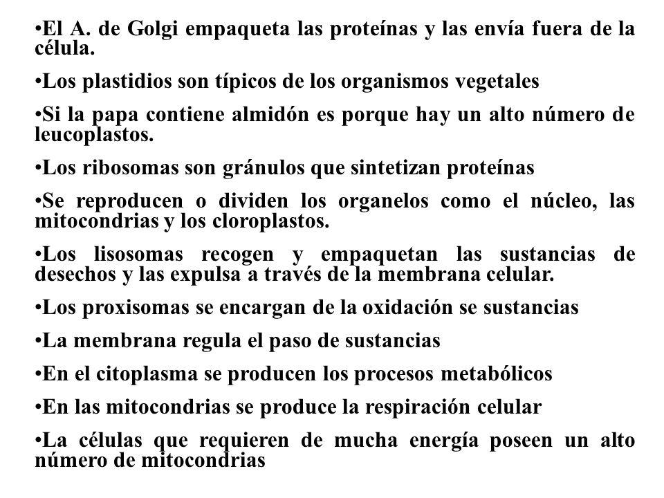 El A. de Golgi empaqueta las proteínas y las envía fuera de la célula.