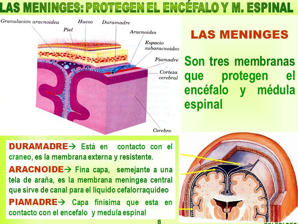 LAS MENINGES: PROTEGEN EL ENCÉFALO Y M. ESPINAL