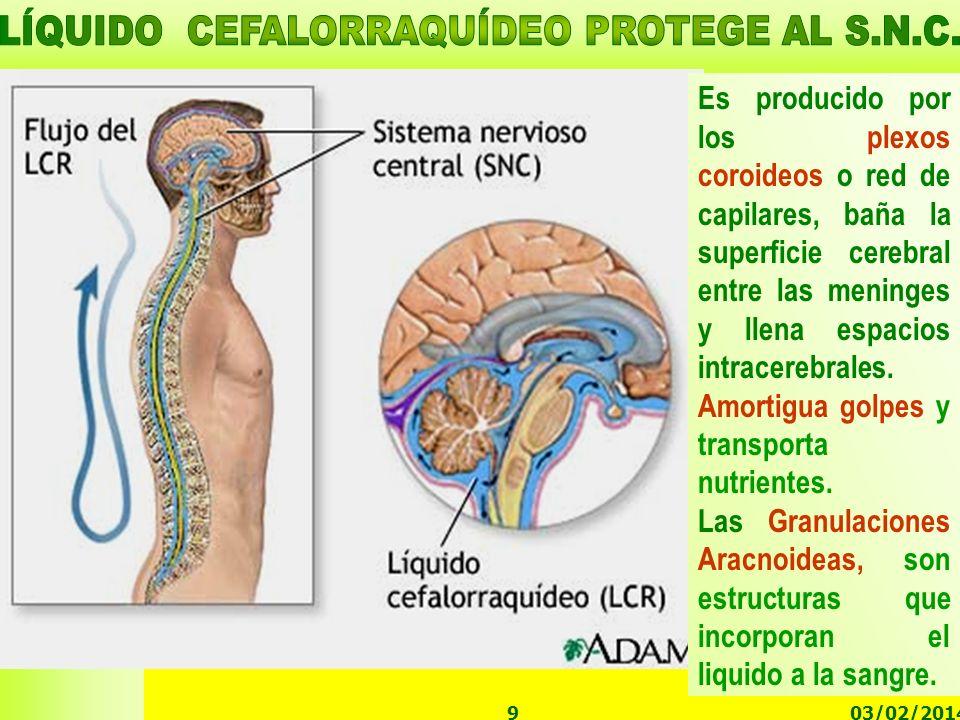 LÍQUIDO CEFALORRAQUÍDEO PROTEGE AL S.N.C.