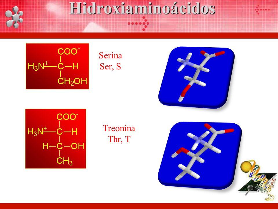 Hidroxiaminoácidos Serina Ser, S Treonina Thr, T