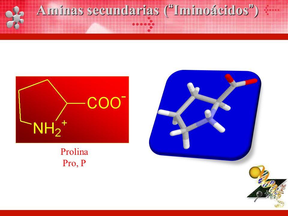 Aminas secundarias ( Iminoácidos )