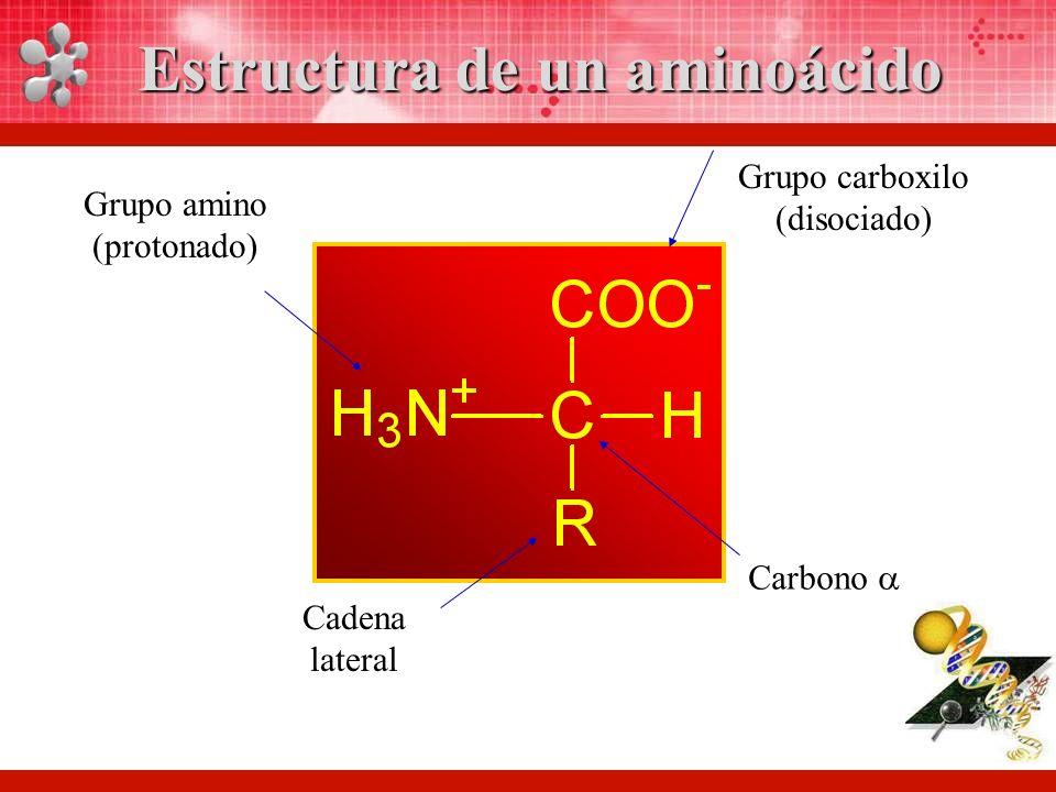 Estructura de un aminoácido