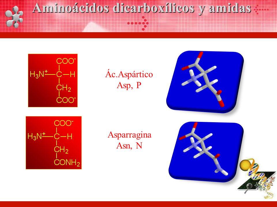 Aminoácidos dicarboxílicos y amidas
