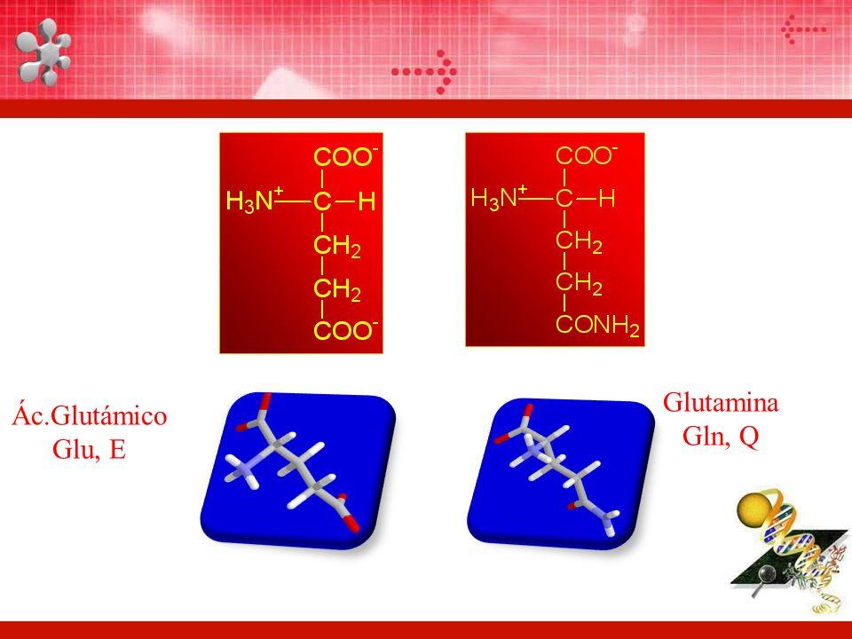 Glutamina Gln, Q Ác.Glutámico Glu, E