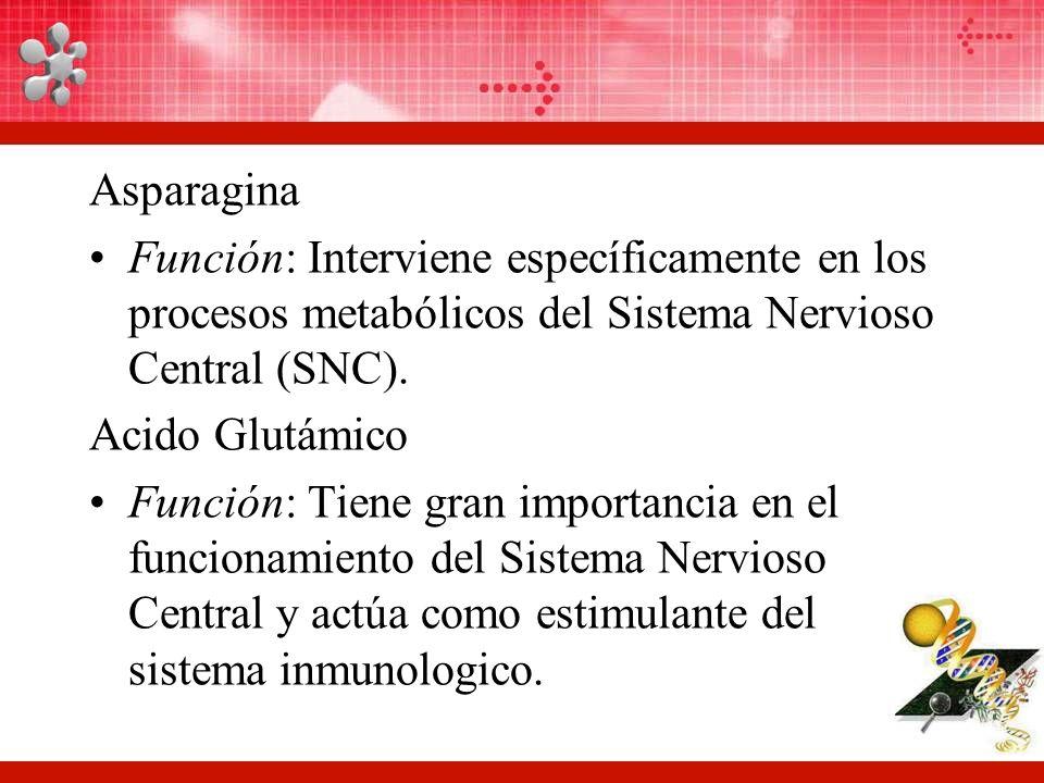 Asparagina Función: Interviene específicamente en los procesos metabólicos del Sistema Nervioso Central (SNC).