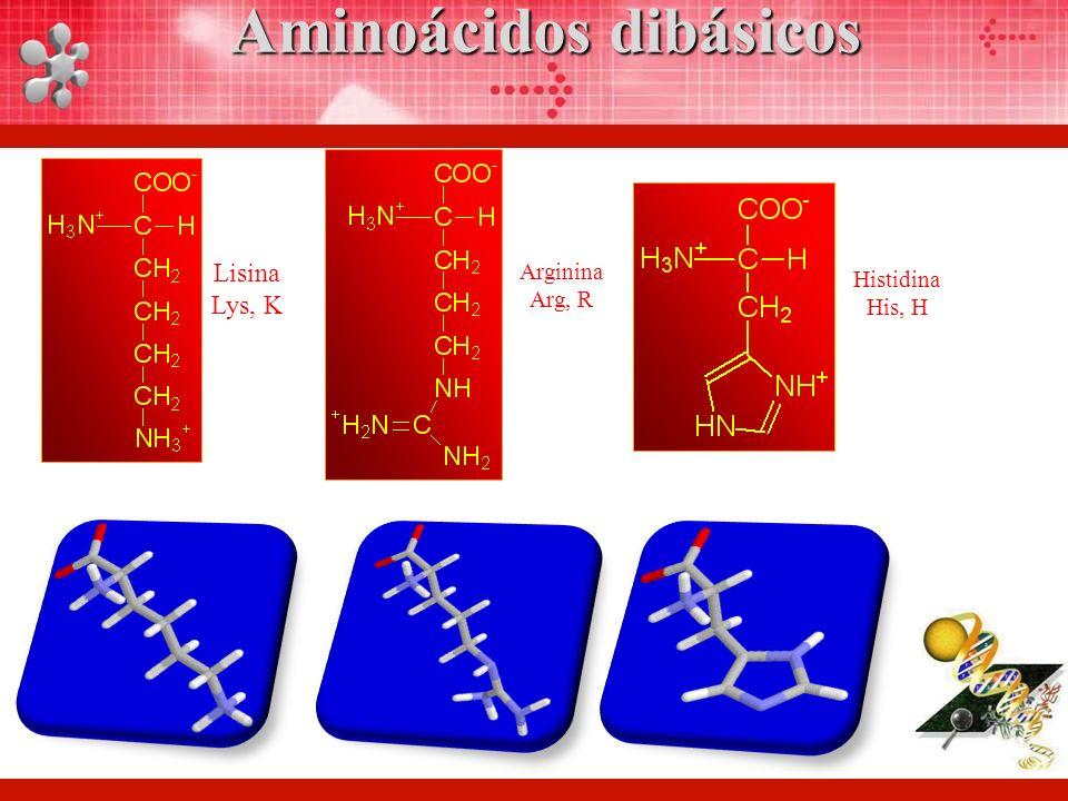 Aminoácidos dibásicos