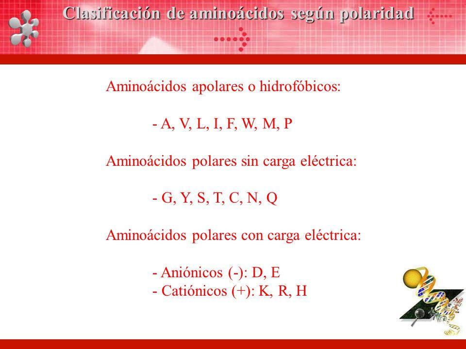 Clasificación de aminoácidos según polaridad