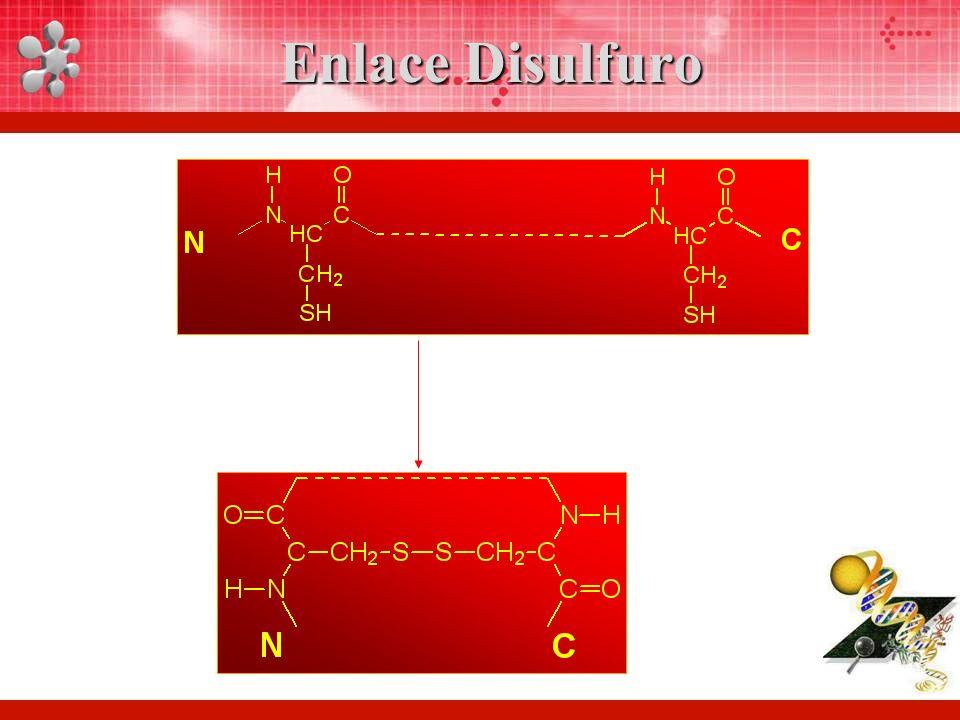 Enlace Disulfuro
