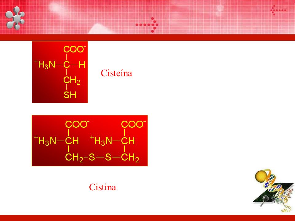 Cisteína Cistina
