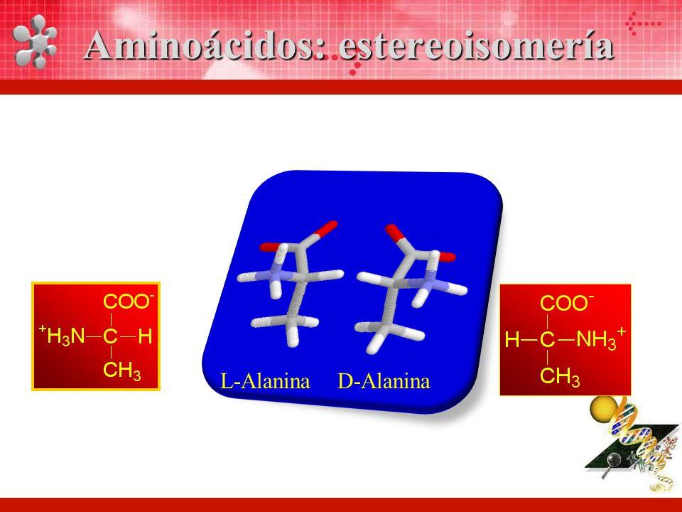 Aminoácidos: estereoisomería