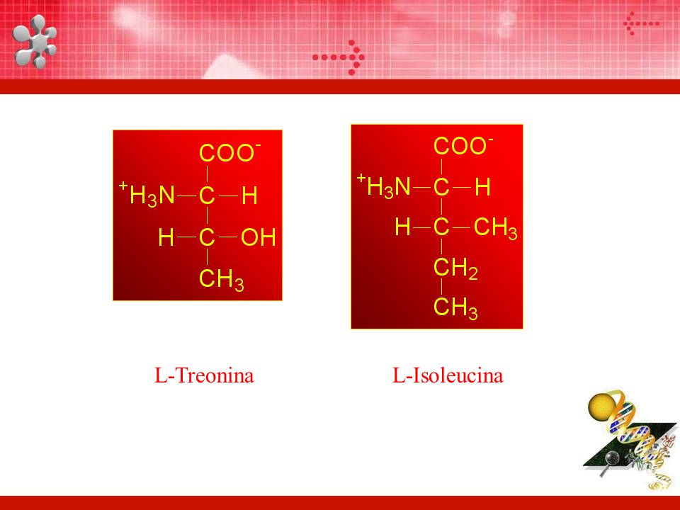 L-Treonina L-Isoleucina