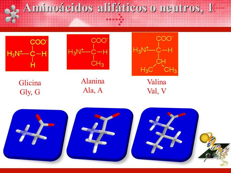 Aminoácidos alifáticos o neutros, 1