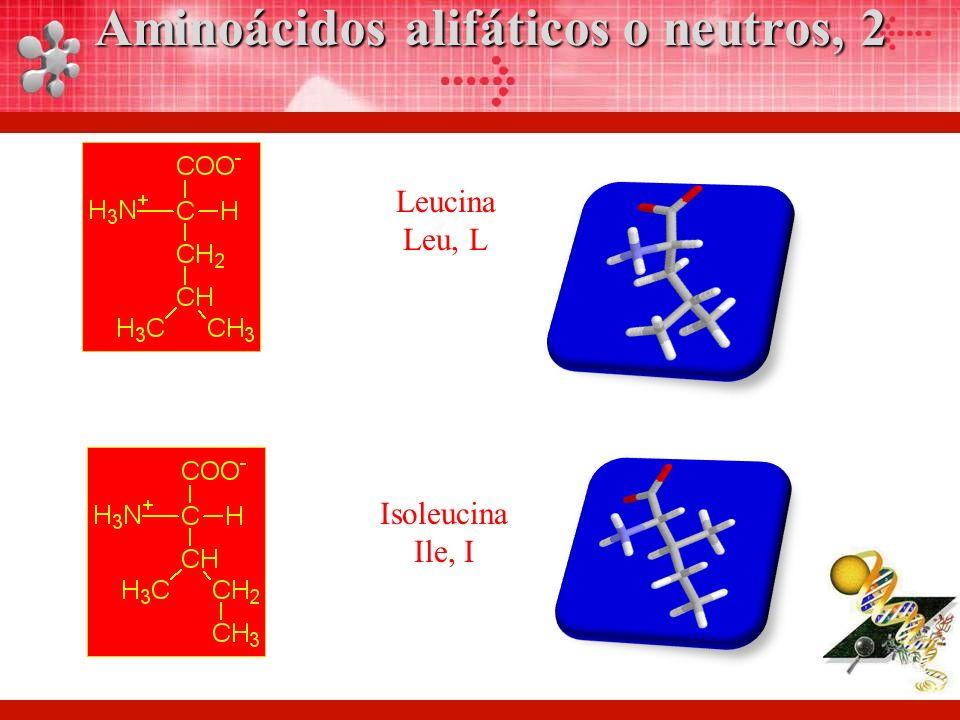 Aminoácidos alifáticos o neutros, 2