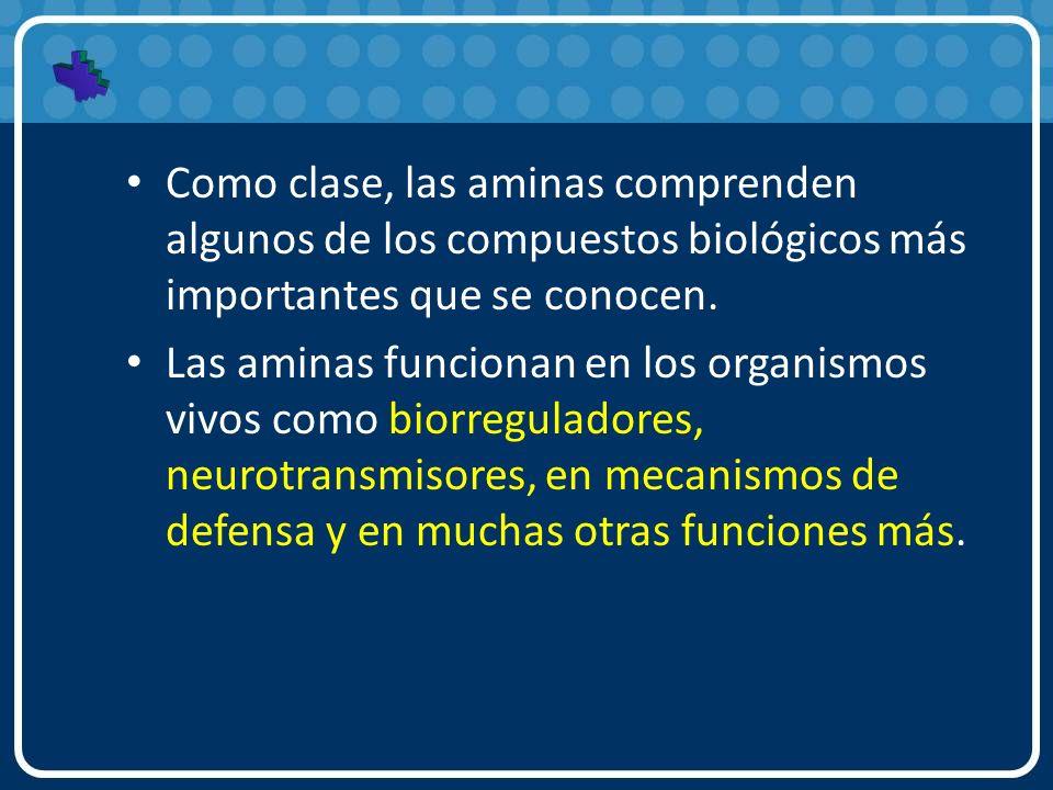 Como clase, las aminas comprenden algunos de los compuestos biológicos más importantes que se conocen.