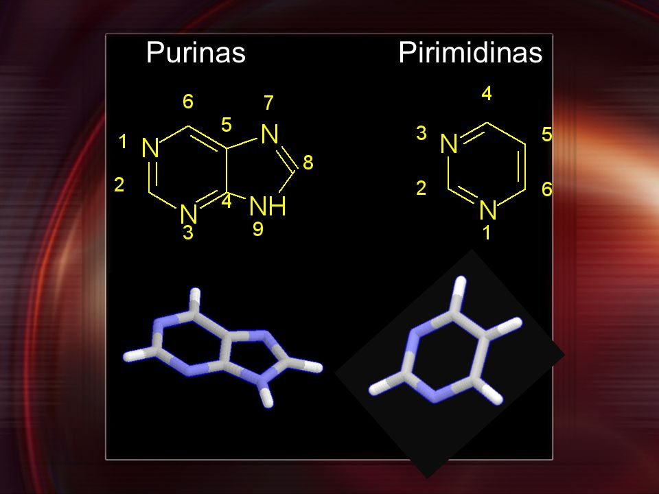 Purinas Pirimidinas
