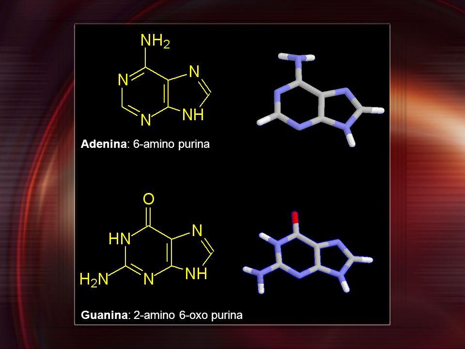 Adenina: 6-amino purina