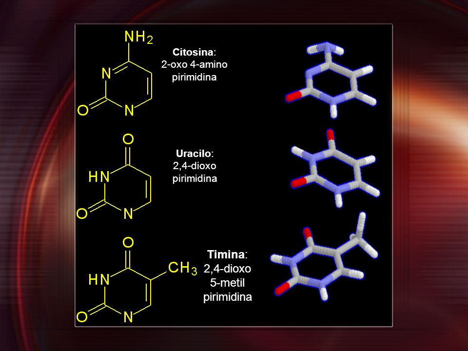 Timina: 2,4-dioxo 5-metil pirimidina Citosina: 2-oxo 4-amino