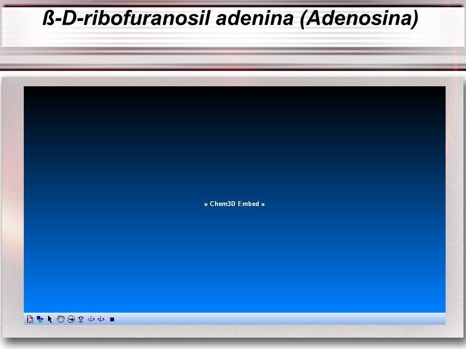 ß-D-ribofuranosil adenina (Adenosina)