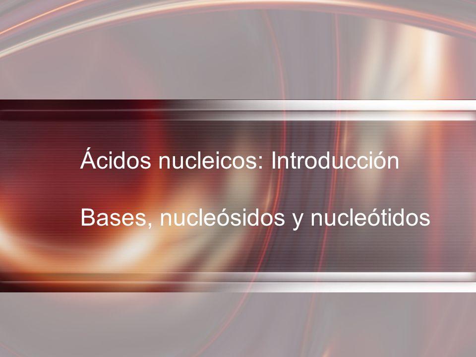 Ácidos nucleicos: Introducción