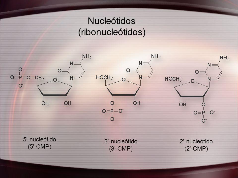 Nucleótidos (ribonucleótidos) 5'-nucleótido (5'-CMP) 3'-nucleótido