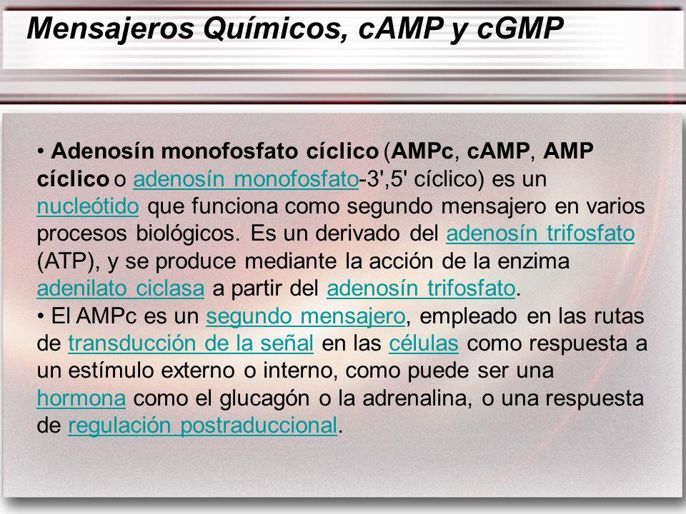 Mensajeros Químicos, cAMP y cGMP