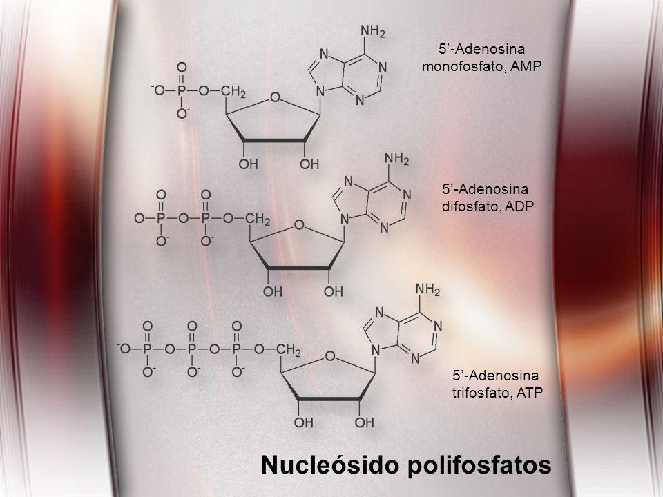 Nucleósido polifosfatos