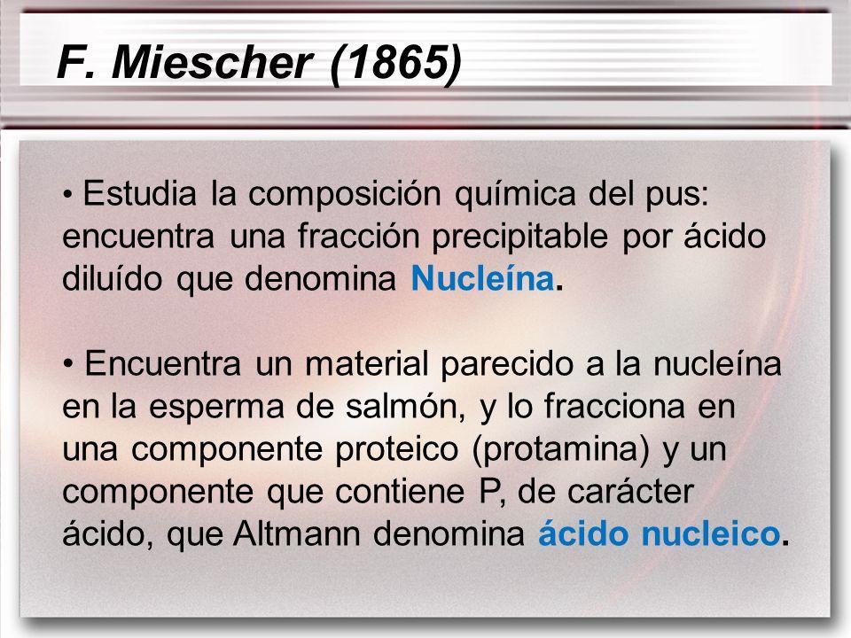 F. Miescher (1865) Estudia la composición química del pus: encuentra una fracción precipitable por ácido diluído que denomina Nucleína.