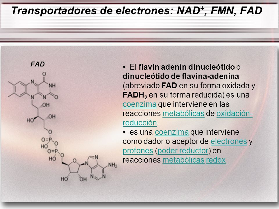 Transportadores de electrones: NAD+, FMN, FAD