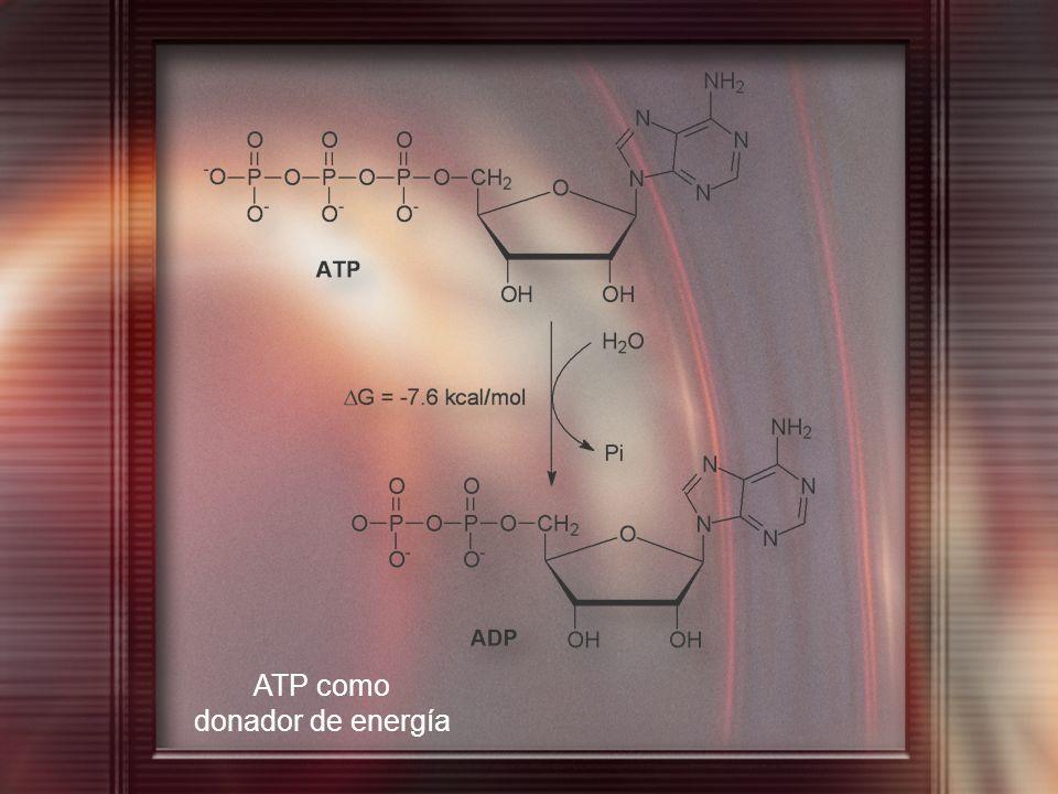 ATP como donador de energía