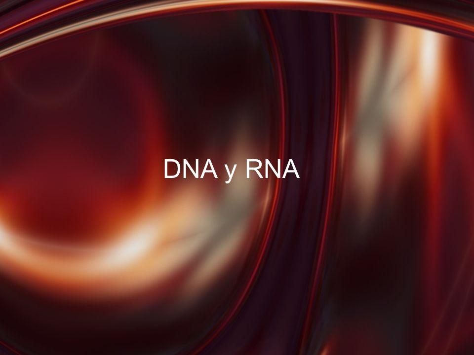 DNA y RNA