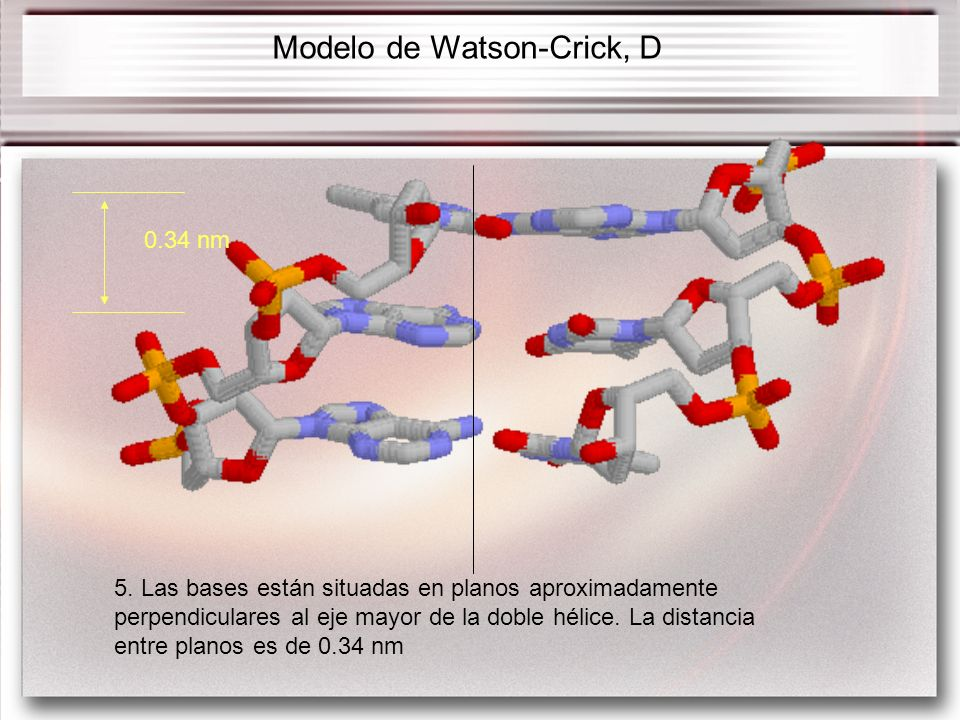 Modelo de Watson-Crick, D