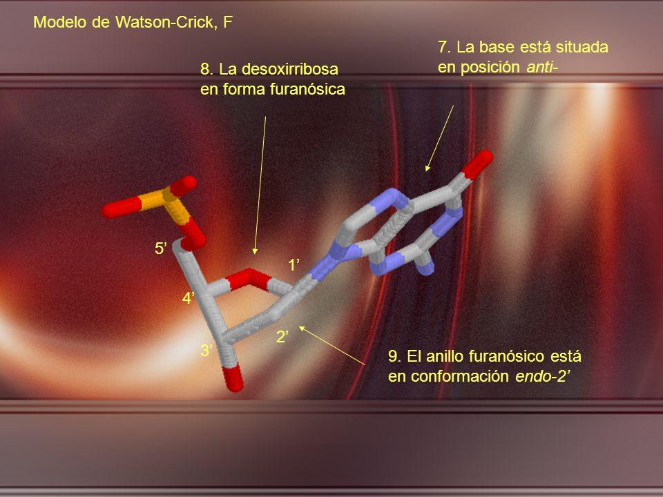 Modelo de Watson-Crick, F