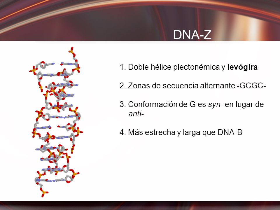 DNA-Z 1. Doble hélice plectonémica y levógira