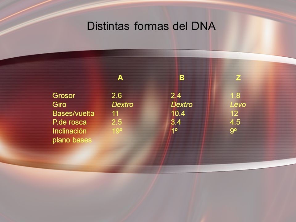 Distintas formas del DNA