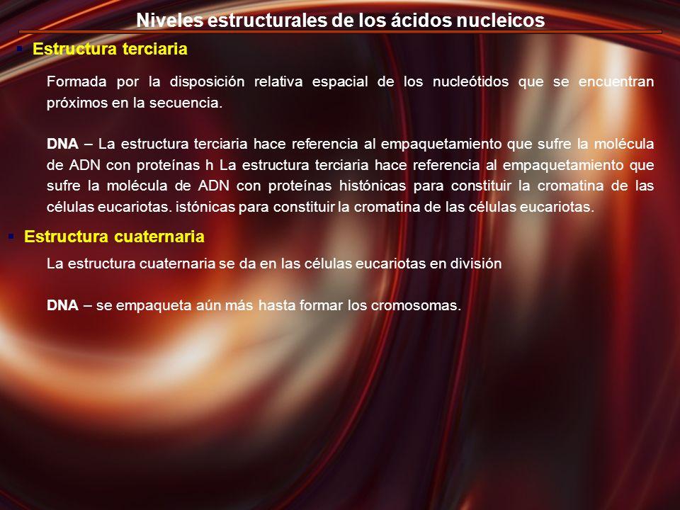 Niveles estructurales de los ácidos nucleicos