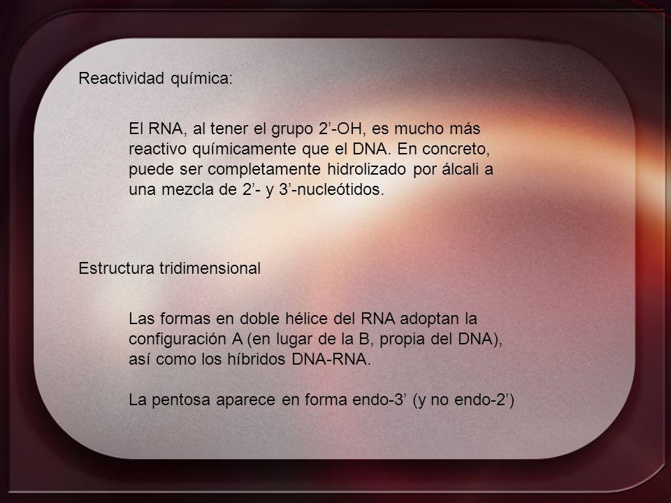 Reactividad química:El RNA, al tener el grupo 2'-OH, es mucho más. reactivo químicamente que el DNA. En concreto,