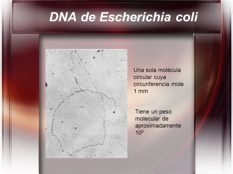 DNA de Escherichia coli