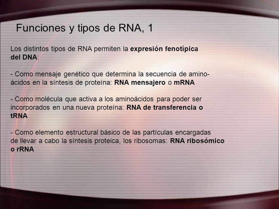 Funciones y tipos de RNA, 1