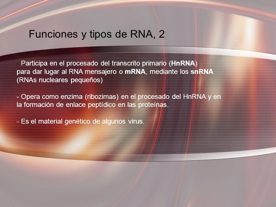 Funciones y tipos de RNA, 2